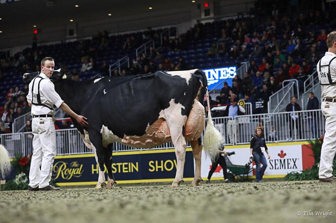 219RWF Holstein -4956