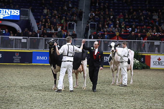219RWF Holstein -4967