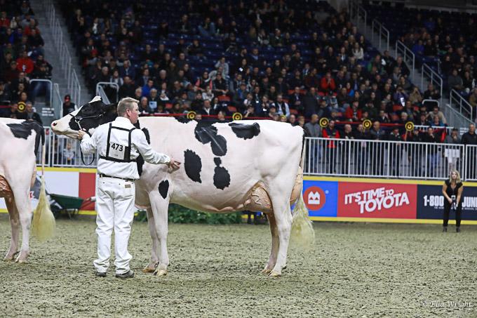 219RWF Holstein -4971