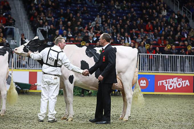 219RWF Holstein -4972