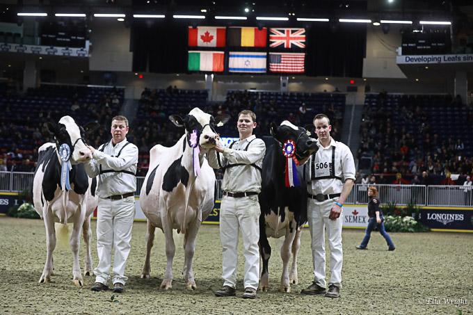 219RWF Holstein -4982