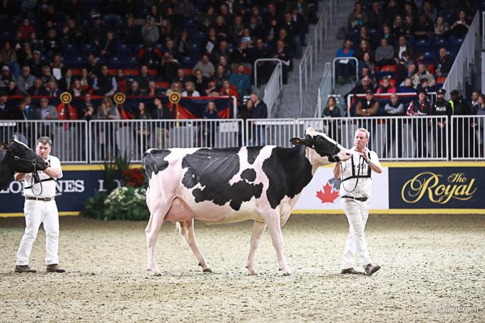 219RWF Holstein-5134