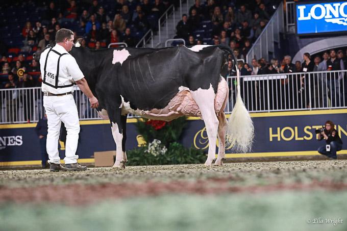 219RWF Holstein-5150