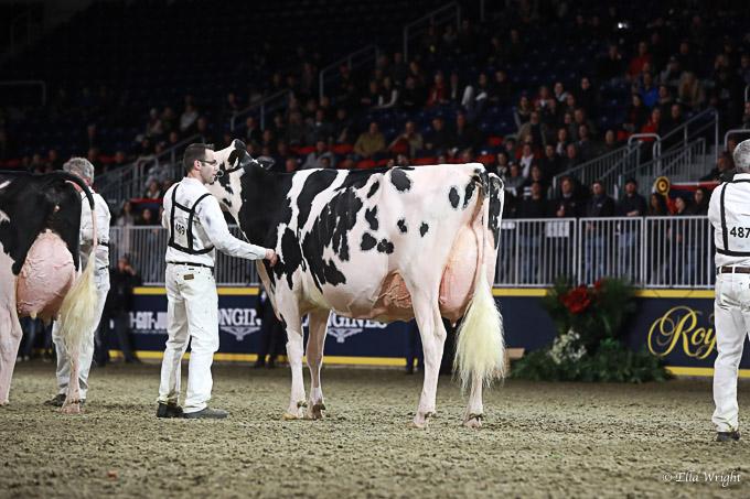 219RWF Holstein-5200
