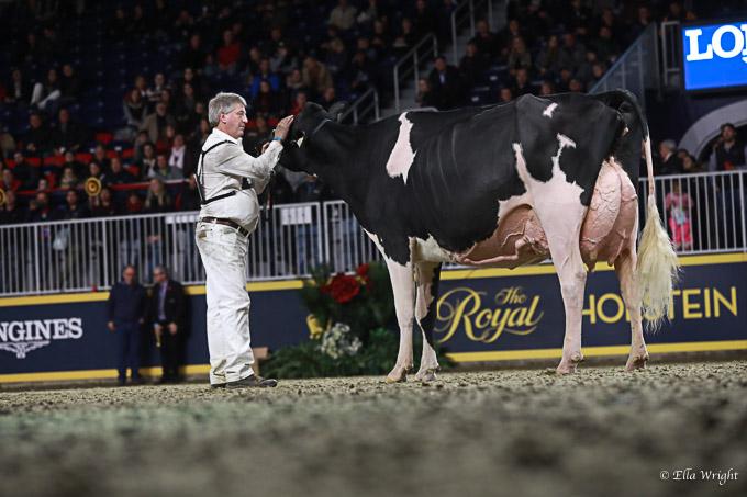 219RWF Holstein-5208