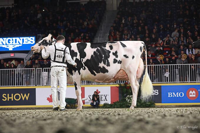219RWF Holstein-5223