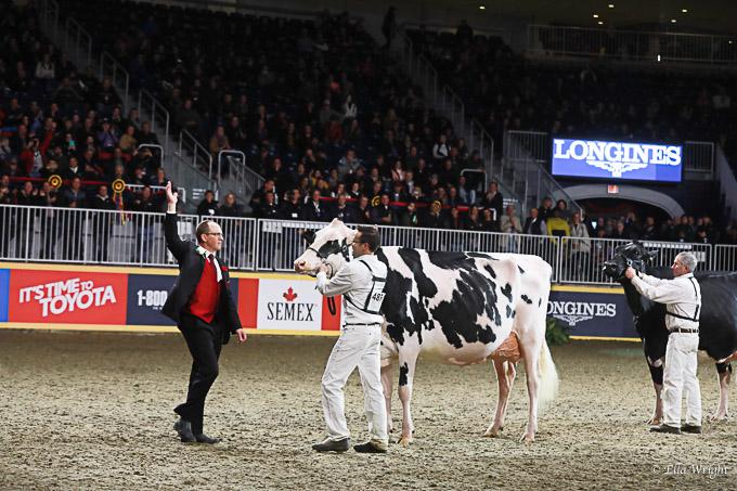219RWF Holstein-5229