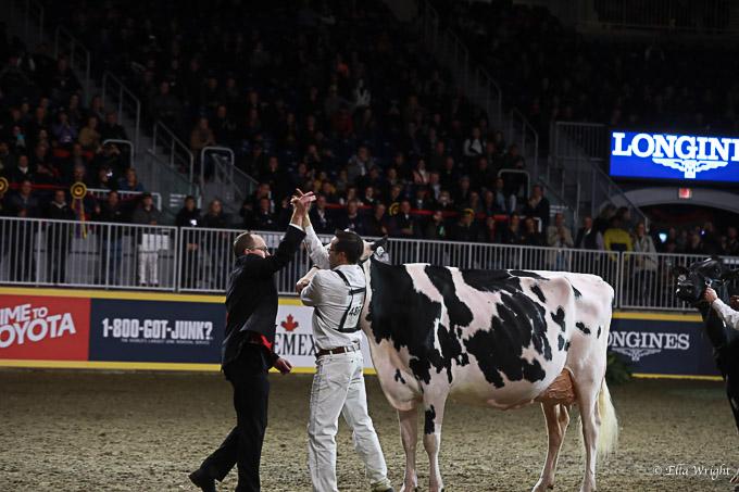 219RWF Holstein-5232