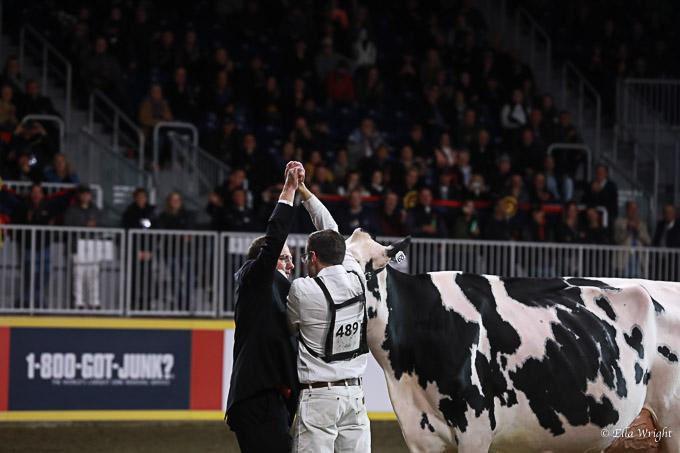 219RWF Holstein-5235