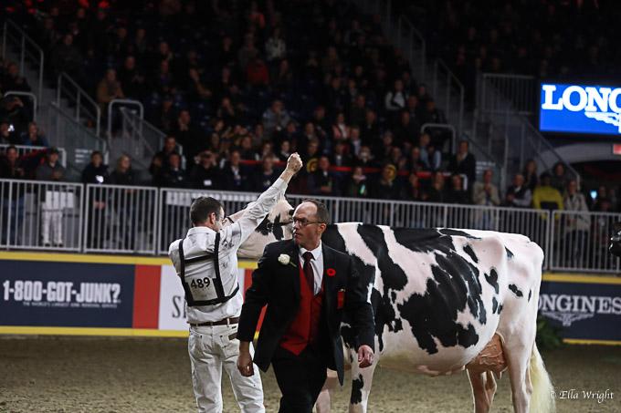 219RWF Holstein-5249