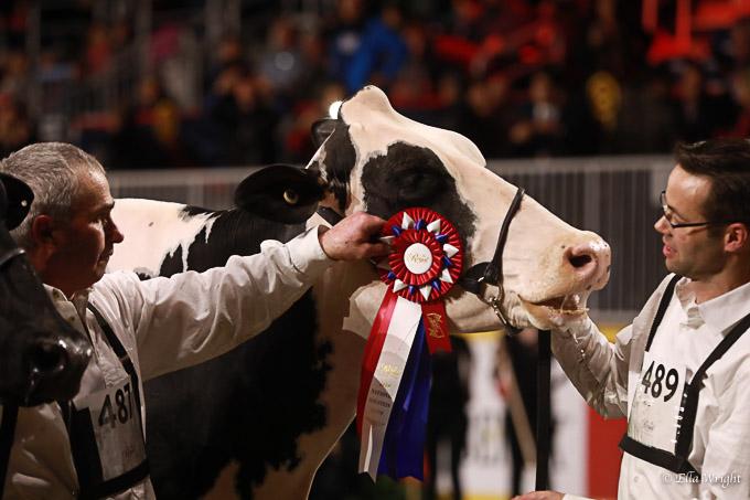 219RWF Holstein-5310