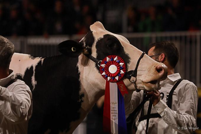 219RWF Holstein-5313