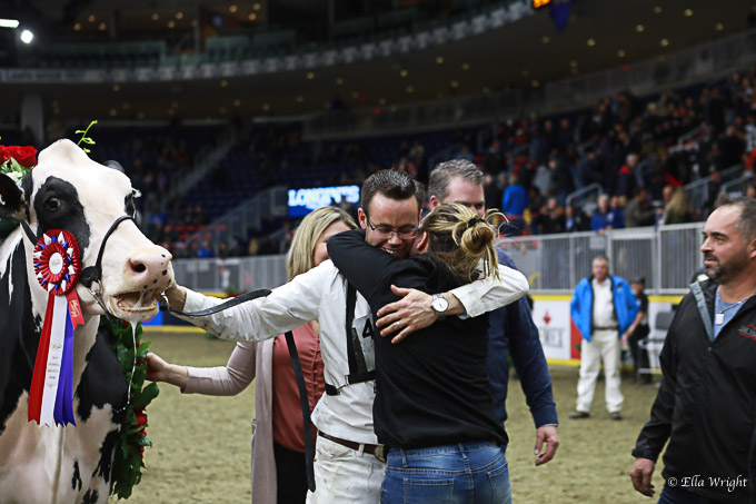 219RWF Holstein-5348