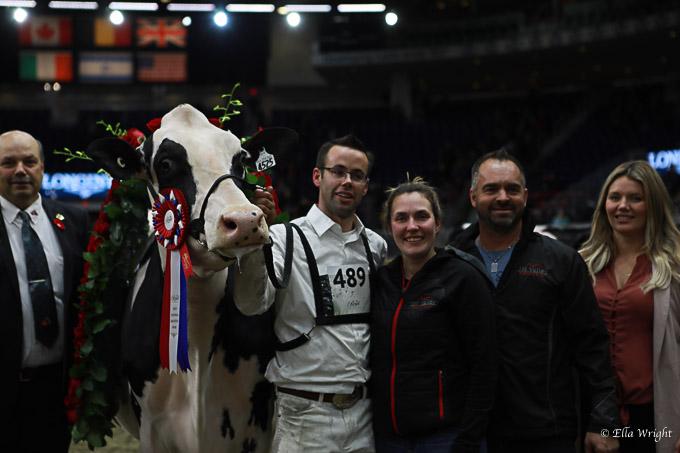 219RWF Holstein-5390