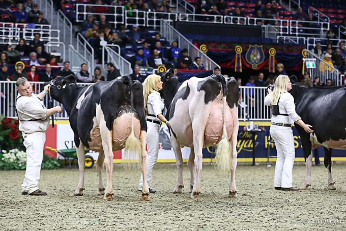 219RWF Holstein-9338