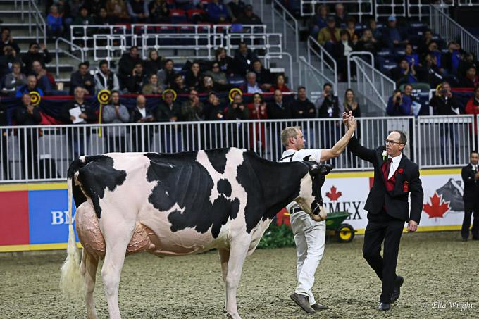 219RWF Holstein-9378