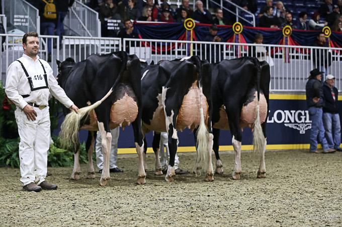 219RWF Holstein -9497