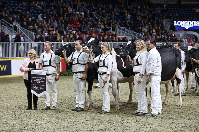 219RWF Holstein -9518