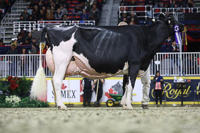219RWF Holstein dat-4725