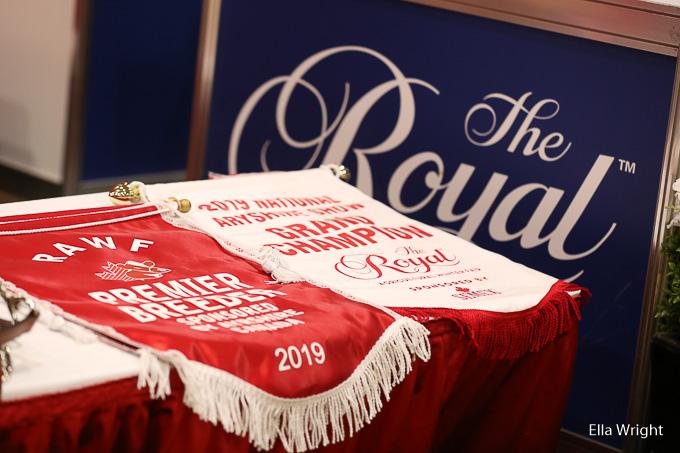 Royal19-Ayrshire-8515