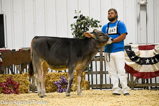 Fall calf-34