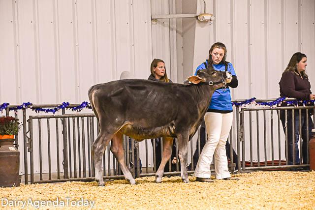 spring calf-14