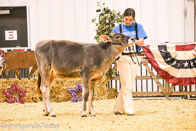 spring calf-3