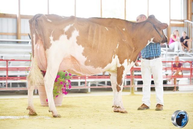 Grand Holstein alone
