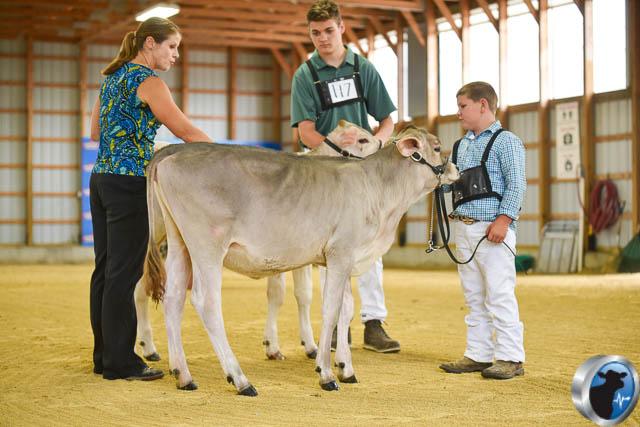 Spring calf-4564