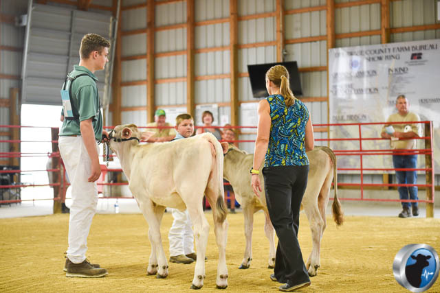 Spring calf-4565
