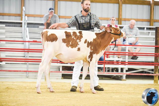 Spring calf-4571