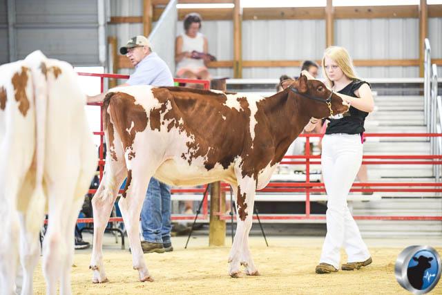 Spring calf-4572