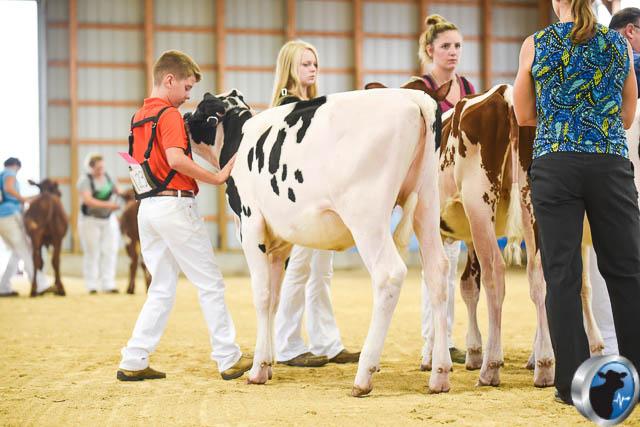 Spring calf-4575