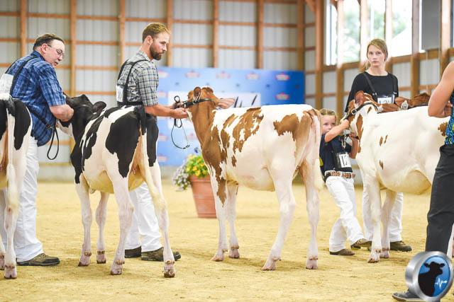 Spring calf-4577