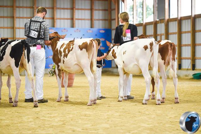 Spring calf-4578