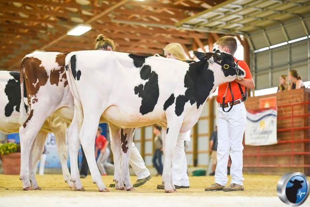 Spring calf-4582