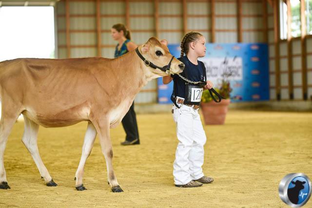 Spring calf-4603
