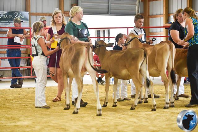 Spring calf-4610