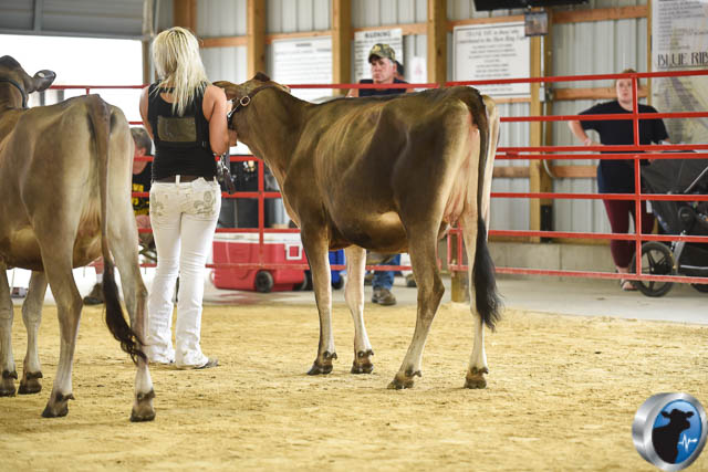 summer yearling-4696