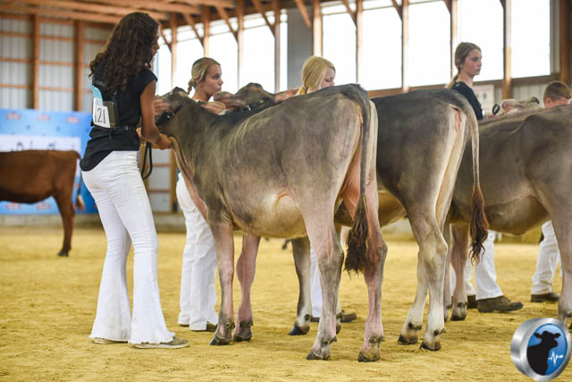winter calf-4614