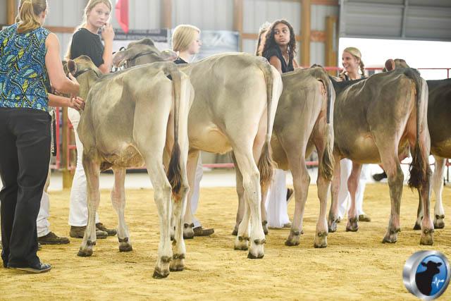 winter calf-4620