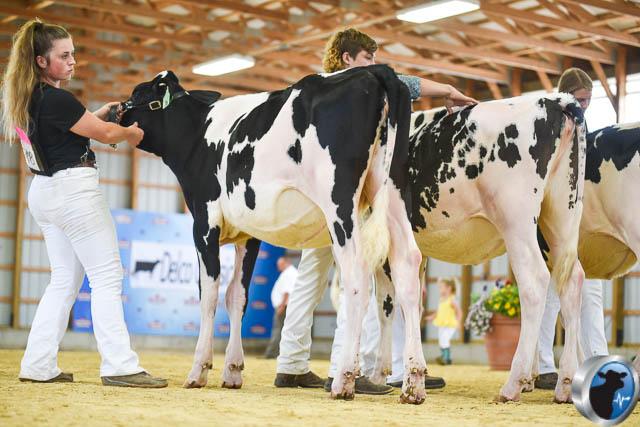winter calf-4626